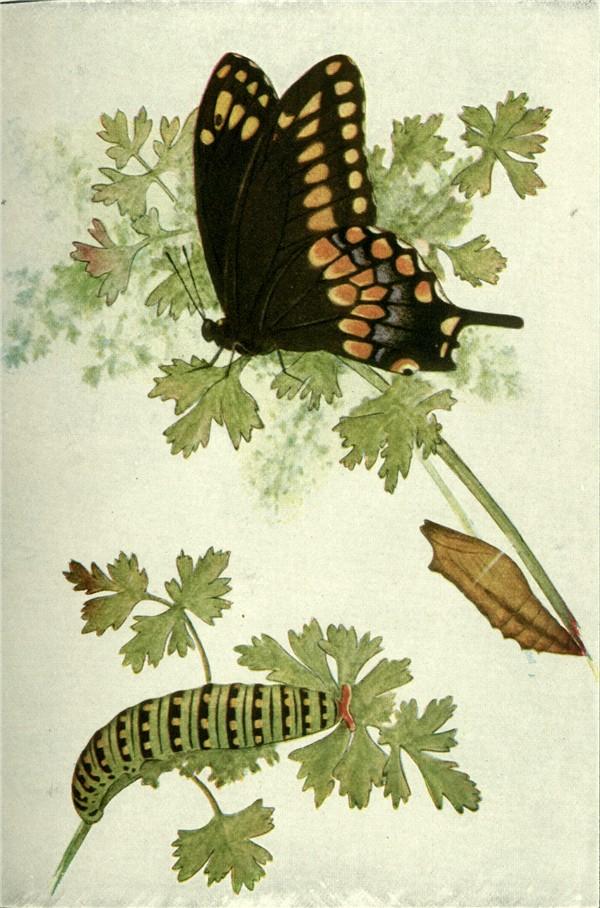 600x908 Butterflies Part 1