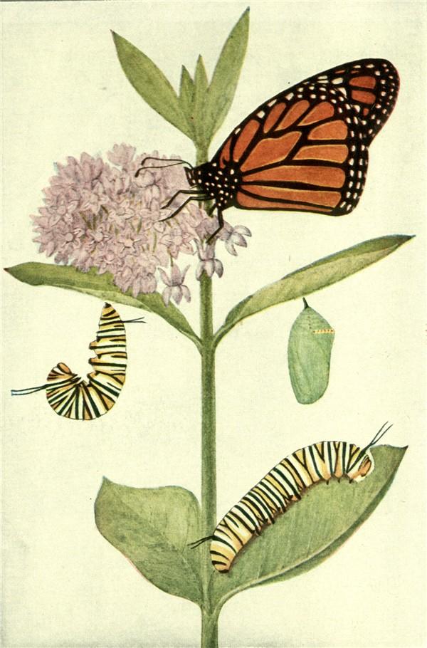 600x910 Butterflies Part 2