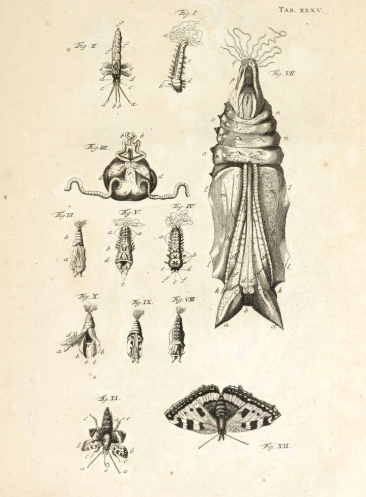719x978 Image Result For Cocoon Butterfly Drawing Cacoon