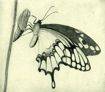 440x387 Kuvahaun Tulos Haulle Butterfly Drawings Perhonen