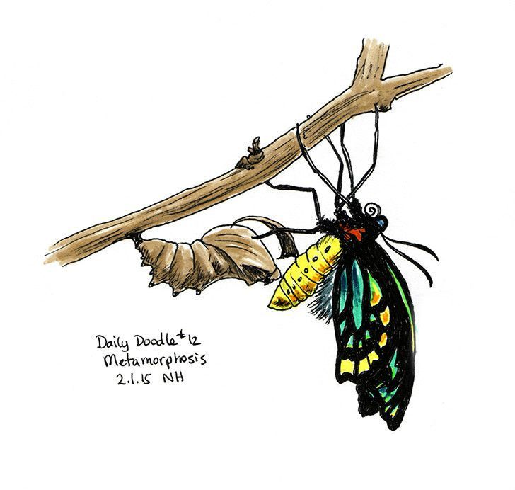 728x692 No.012 Metamorphosis Doodles, Butterfly And Drawings