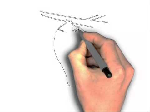 480x360 How To Draw A Butterfly Cocoon