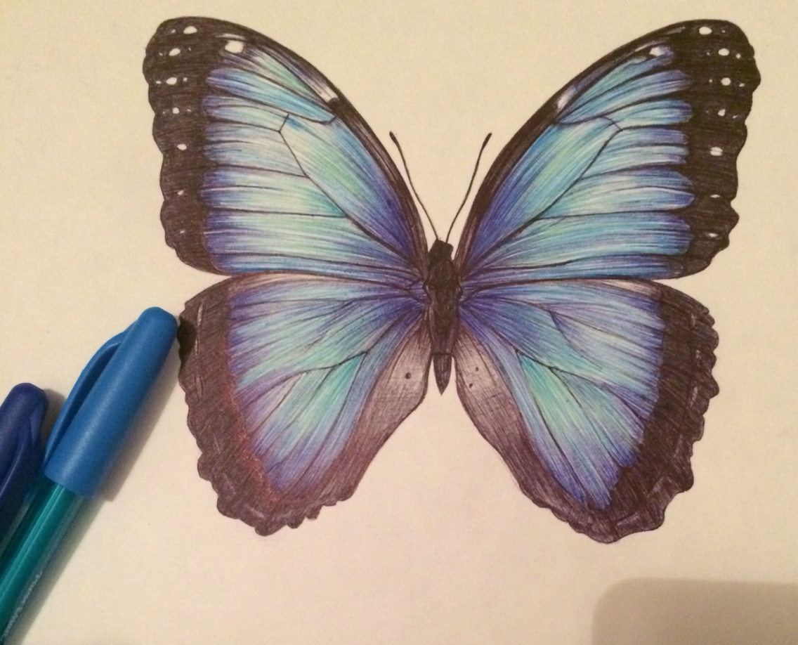 1136x918 Butterfly Biro Drawing