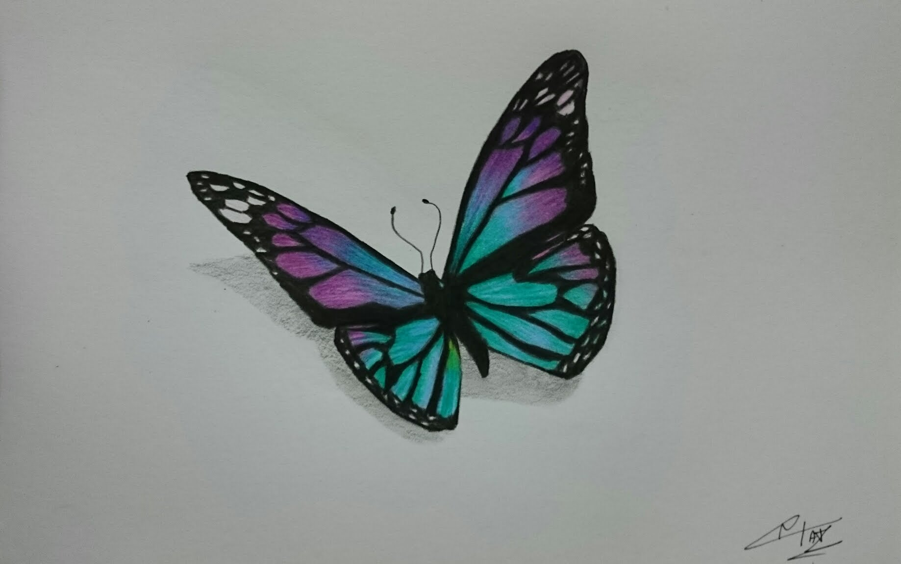 1838x1152 How To Draw A Realistic Butterfly With Colored Pencils