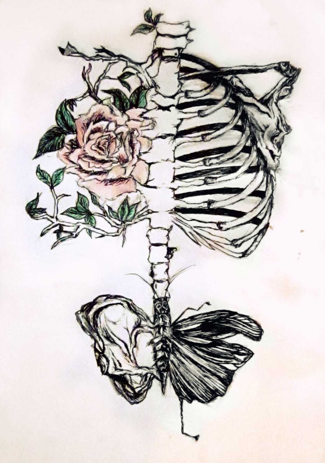 1046x1490 Drawn Butterfly Skeleton
