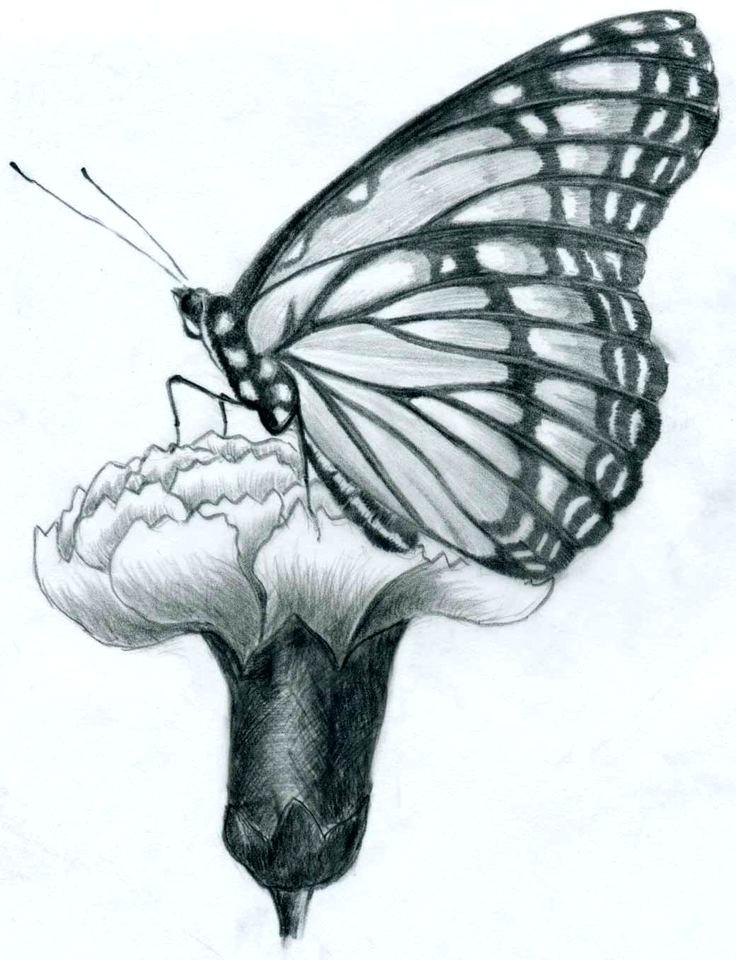 736x960 Texture Drawing Ideas I Prepared A Couple Of Easy Butterfly Pencil
