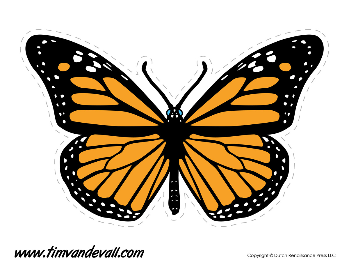 photo about Printable Butterfly Template named Butterfly Drawing Template at  Cost-free for