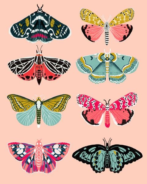 480x600 Lepidoptery No. 1 By Andrea Lauren Art Print Illustration