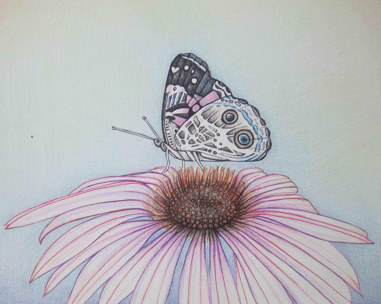 1500x1198 Pencil Art Work Butterfly Atop Pink Cone Flower Original