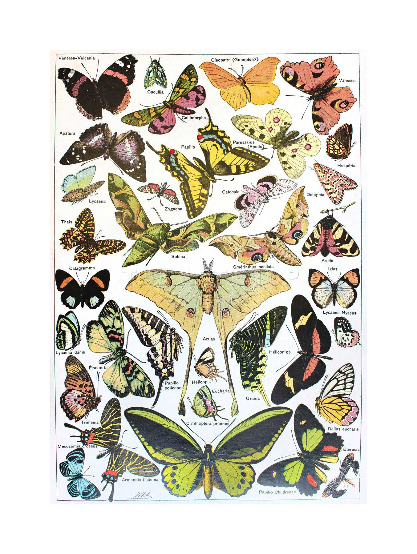 1354x1800 Scientific Butterfly Moth Colour Drawing Framed Art Print Picture