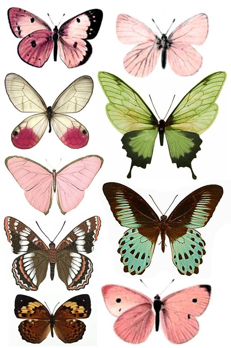 736x1107 Tartine Butterfly, Butterfly Print And Papillons