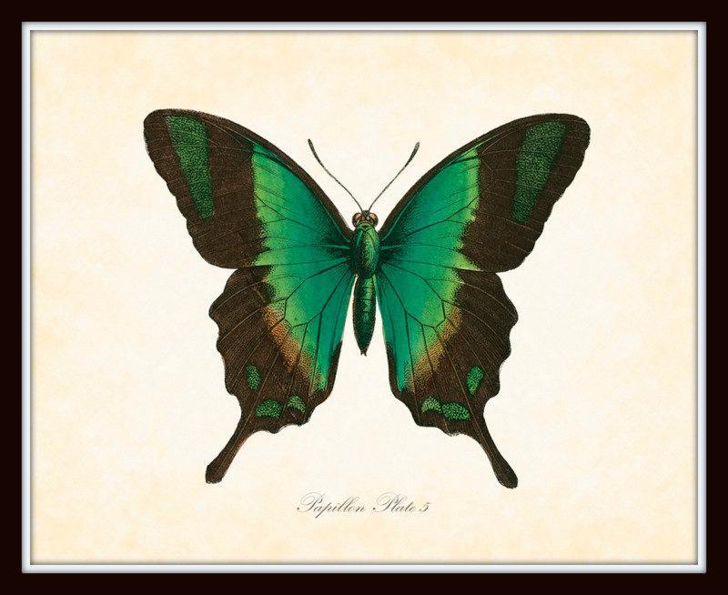 800x654 Vintage Butterfly Series 2 Papillon Plate 5 Art Print 8x10 Natural
