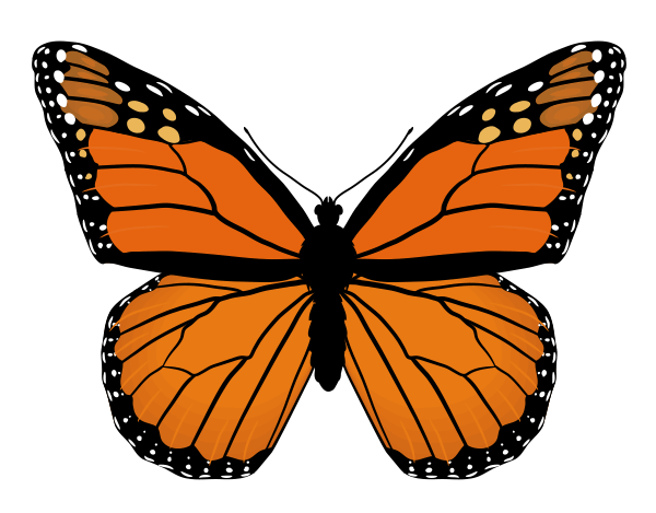 Butterfly Images For Drawing at GetDrawings.com | Free for personal ...