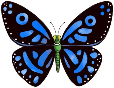Butterfly Images For Drawing on Symmetrical Patterns For Kids