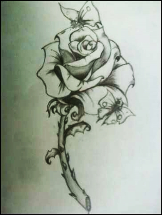 Roses And Butterflies Drawings Butterfly On Ro...
