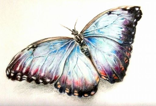 512x350 butterfly pencil drawing by chloemal on deviantart