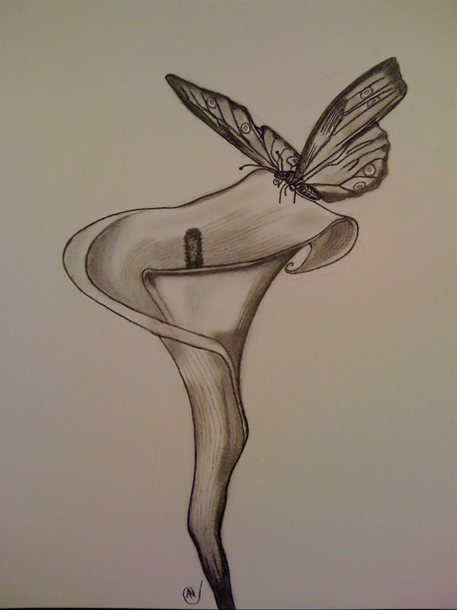 645x860 drawings of flowers and butterflies pencil drawings of flowers