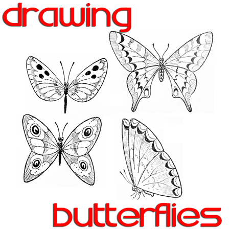 450x450 Butterfly Drawing Easy Methods How To Draw Butterflies Step By