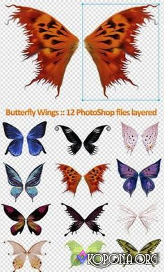 236x391 Wings Psd52296