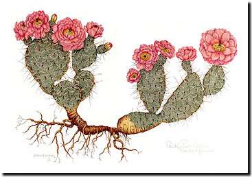 367x258 Colored Pencil Drawings, Paintings, Prickly Pear Cactus,colored