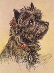 224x300 249 Best ~cairn~terrier~art~ Images On Cairn Terrier