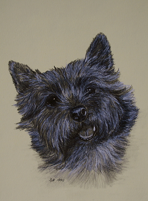 515x700 Cairn Terrier Drawing By Susan Herber