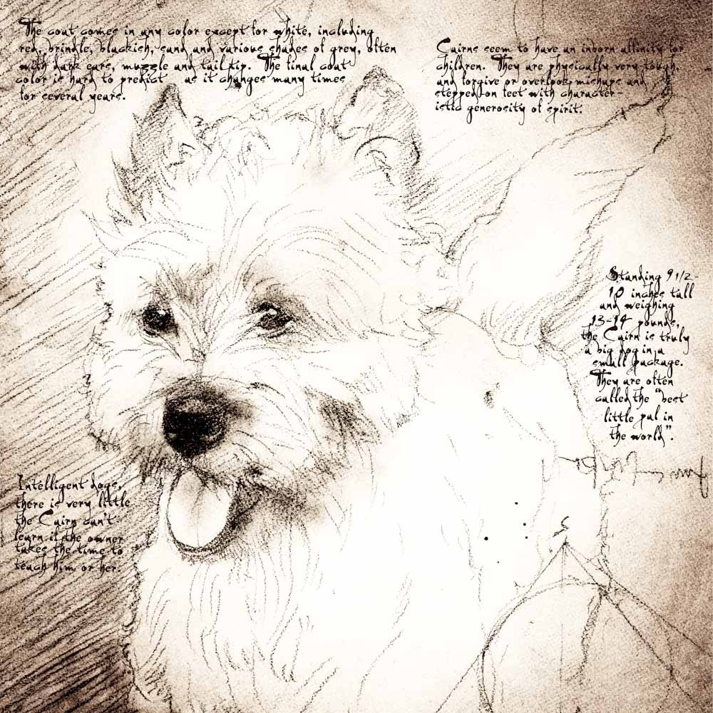 1000x1000 Cairn Terrier Female Detail Of A Da Vinci Style Drawing