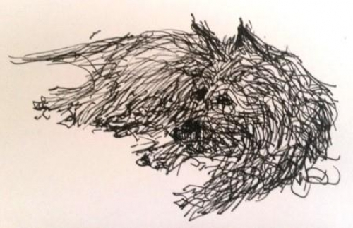 500x323 Cairn Terriers