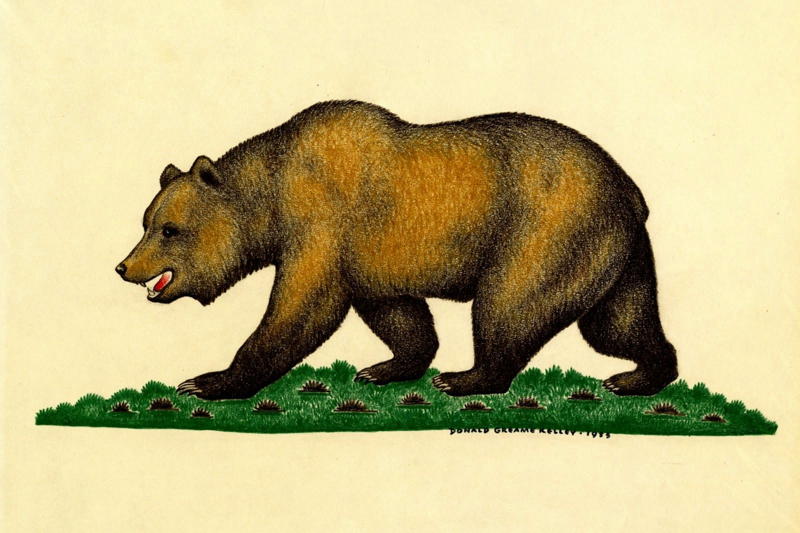 1600x1066 Donald Greame Kelley 1953 Drawing Of Grizzly Bear
