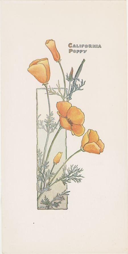 450x890 California Poppy Botanical Illustration Botanical