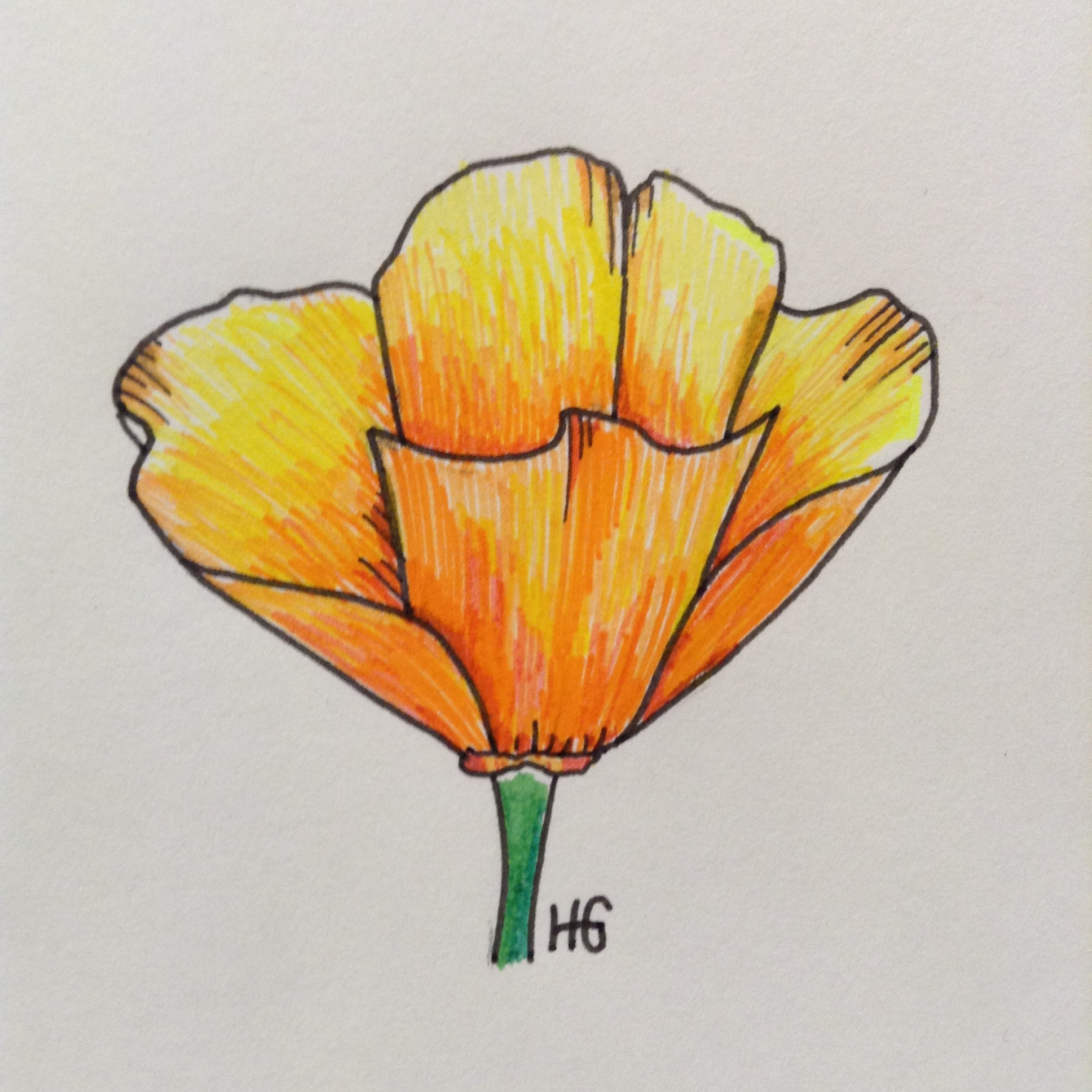 1936x1936 California Poppy Ink Drawing My Gallery