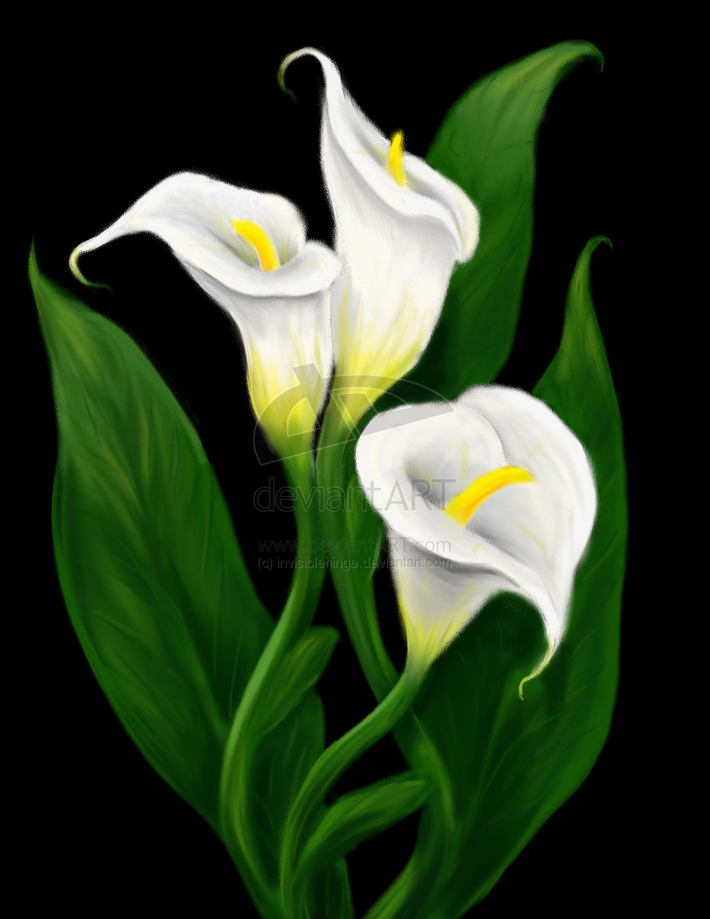 Calla Lilies Drawing At Getdrawings Free For Personal Use