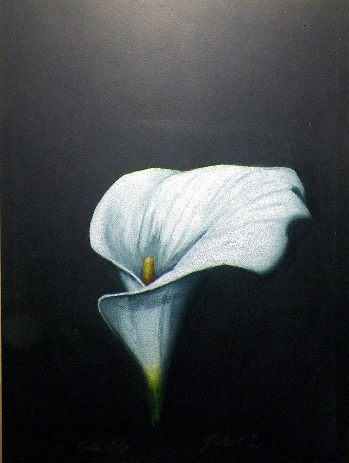 679x900 Calla Lily Drawing By Mickael Bruce