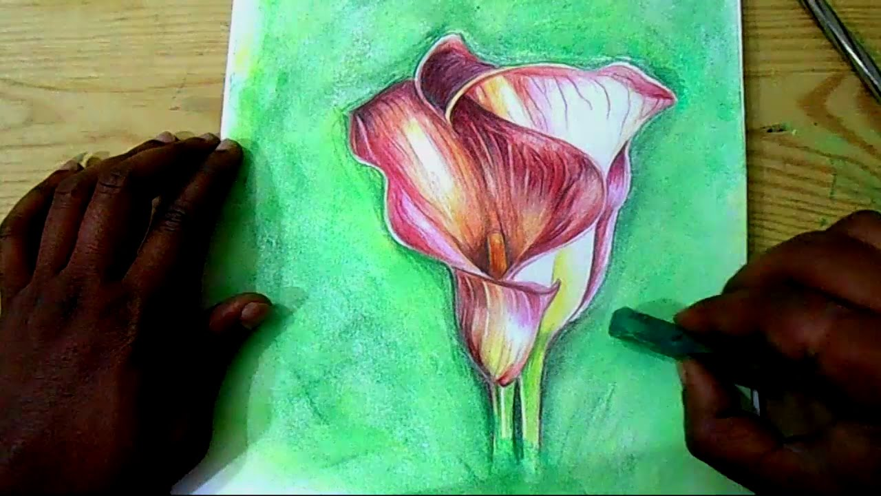 Calla lily flower drawing at getdrawings free for personal use 1280x720 how to draw flowers calla lilies flower step by step drawing izmirmasajfo Image collections