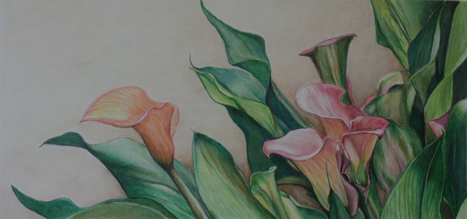 1600x749 Art By Charlotte Yealey Calla Lilies Colored Pencil By