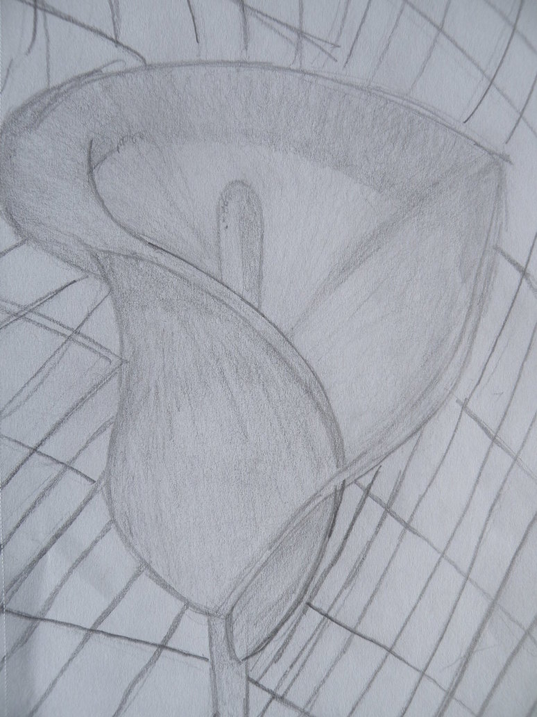 774x1032 Calla Lily Pencil Sketch By Lessthanthree123