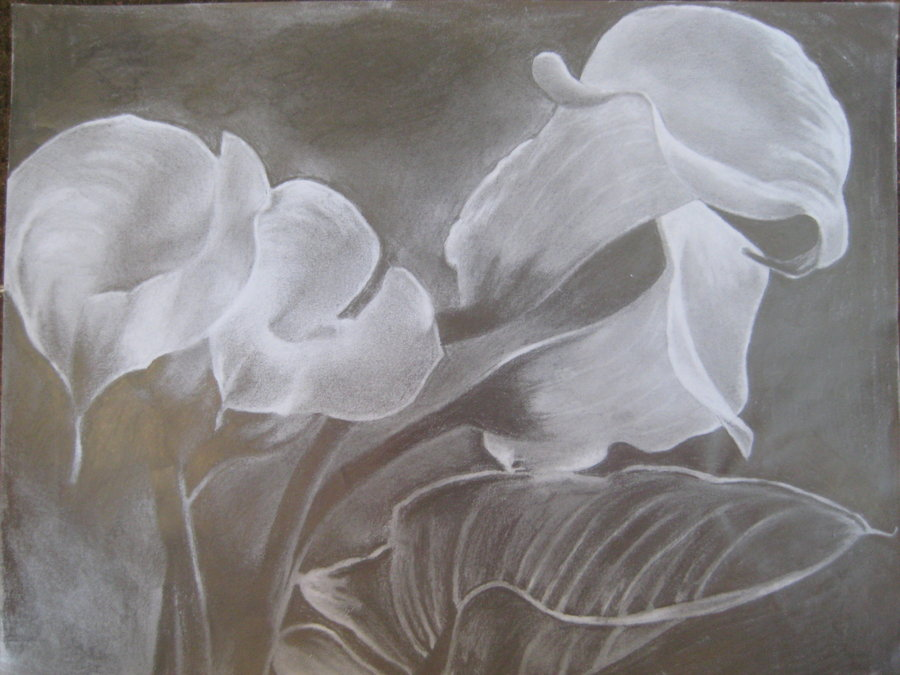 900x675 Calla Lilies By Swear By The Pencil