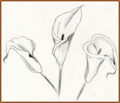 236x202 How To Draw An Orchid Exam Guide Online