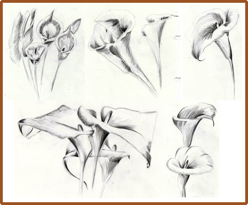 800x660 Weekly Doodles And Tuts How To Draw A Calla Lily Method 3