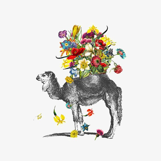 564x564 Camel, Hand Painted Camel, Drawing Camel, Desert Png Image
