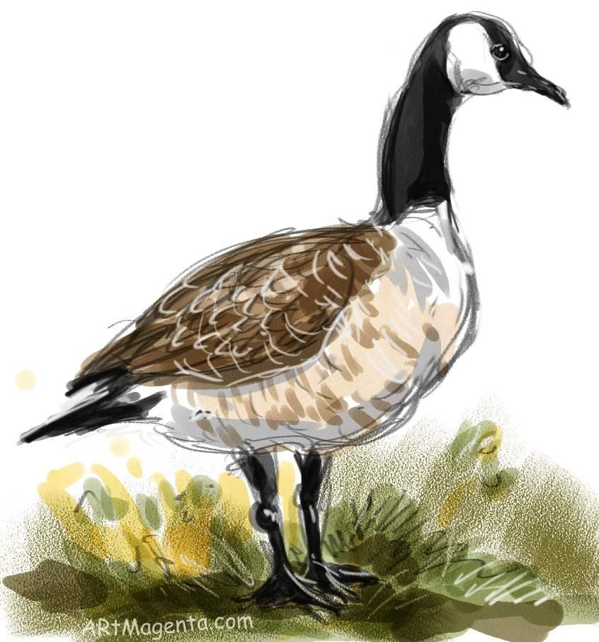 846x906 Birds Canada Goose