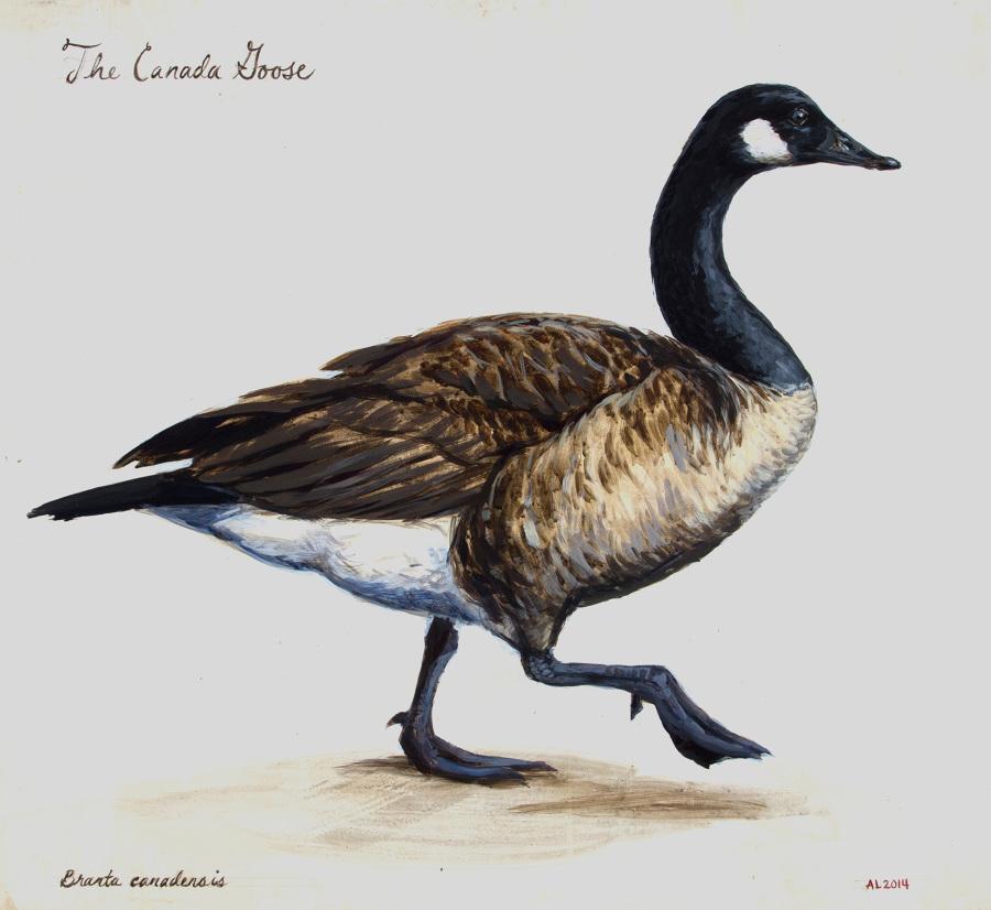 900x826 Canada Goose
