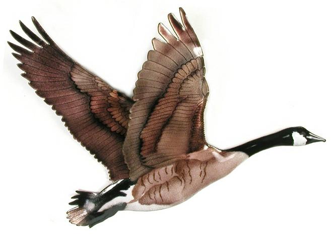 661x468 W8000 Goose Single Flying Goose Single Flying Bovano Goose Single