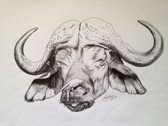 570x427 African Cape Buffalo Drawing Pen Sketch Buffalo Africa