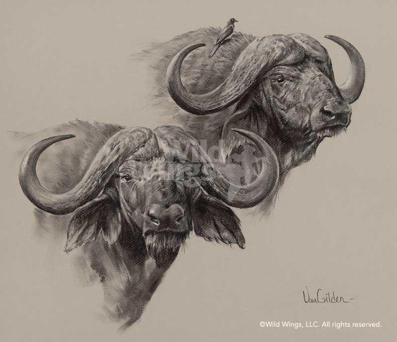 790x681 African Cape Buffalo Original Charcoal Drawing Wild Wings