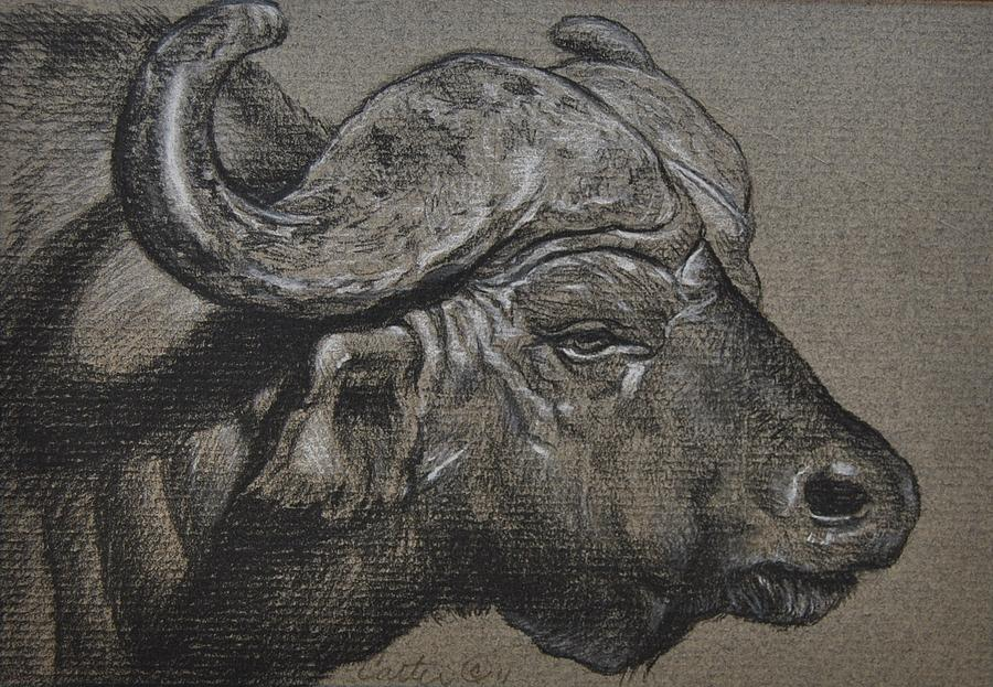 900x623 Cape Buffalo Drawing By Calvin Carver African Animal Forms By