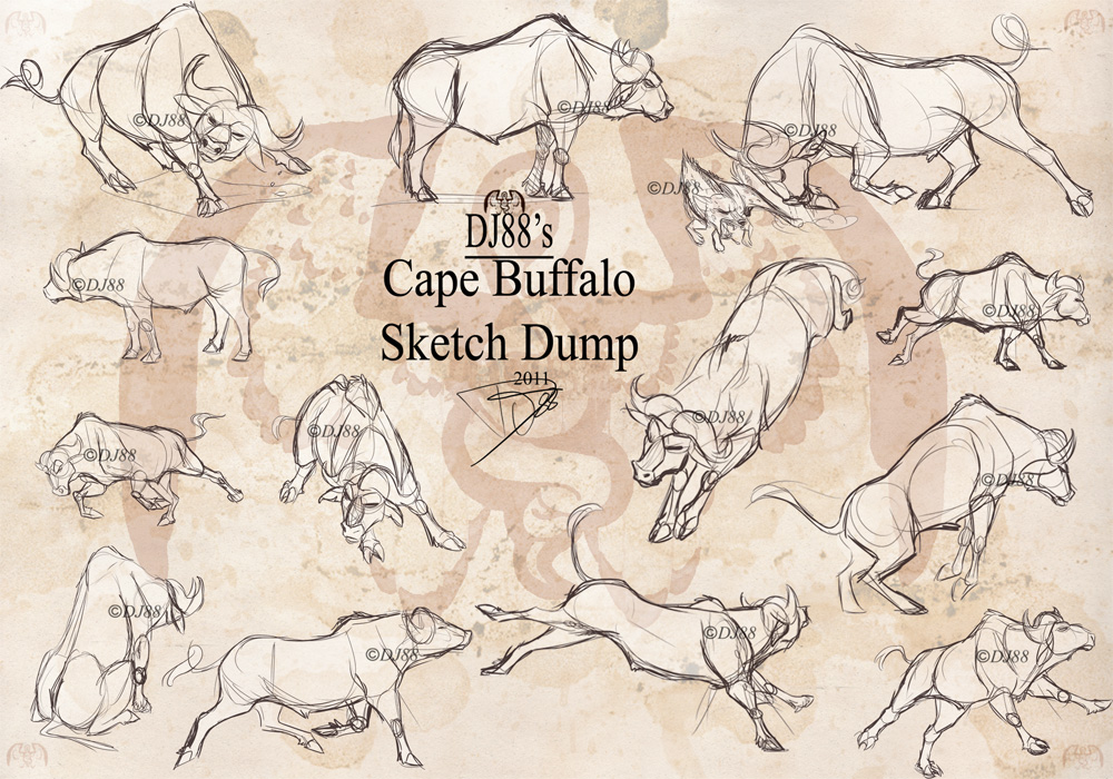 1000x700 Cape Buffalo Sketch Dump By Dj88