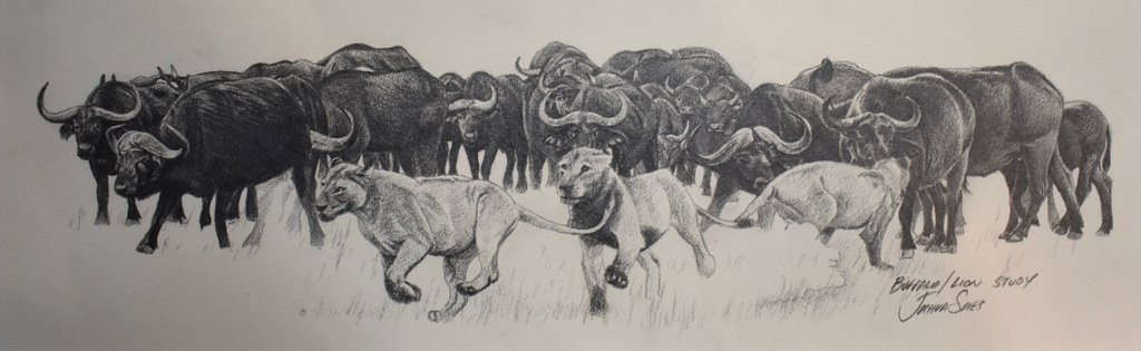 1024x315 Cape Buffalo Amp Lions