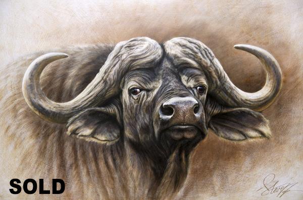 600x397 Steve Morvell Australian Wildlife Artist African Cape Buffalo Bull