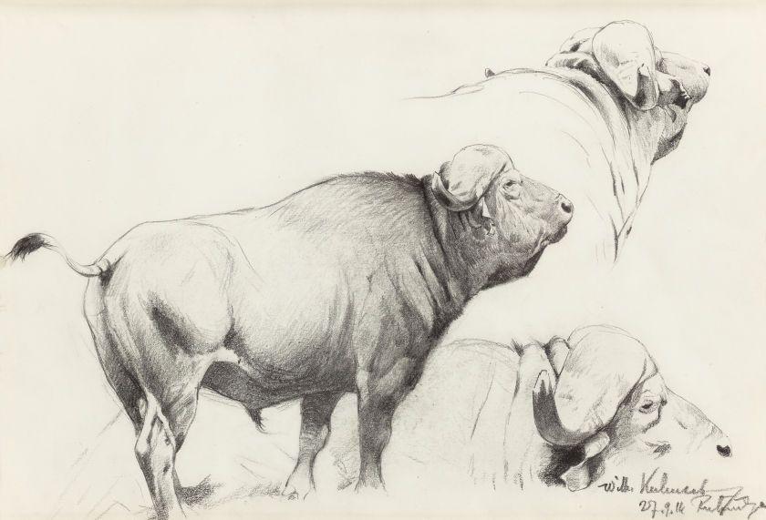 840x571 Wilhelm Kuhnert (German, 1865 1926)cape Buffalo, Pencil On Paper